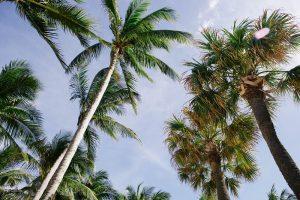 Contato com a natureza - coqueiros
