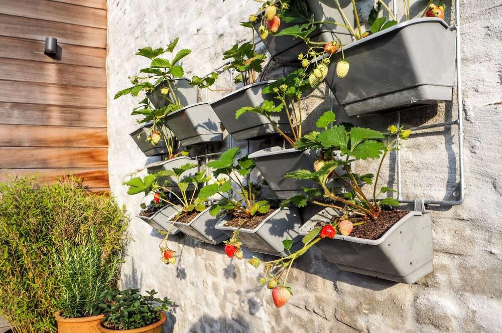 3 dicas para fazer uma horta suspensa no seu apartamento