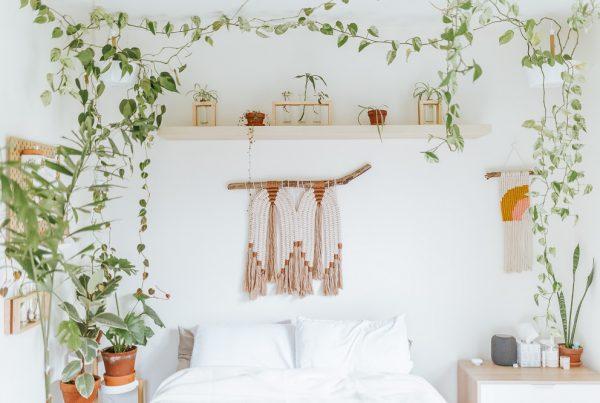 Plantas no quarto branco
